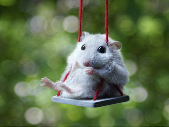 mouse_in_swing